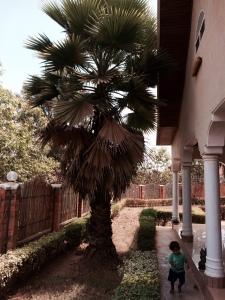 palm full length